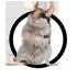 siebenschlaefer-icon