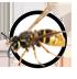 wespe-icon