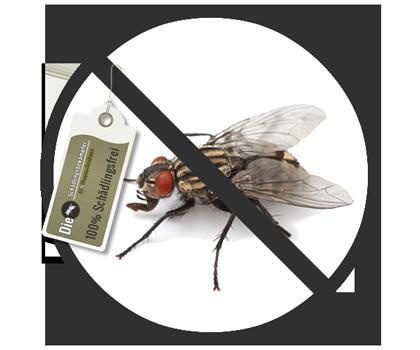 fliege-banner